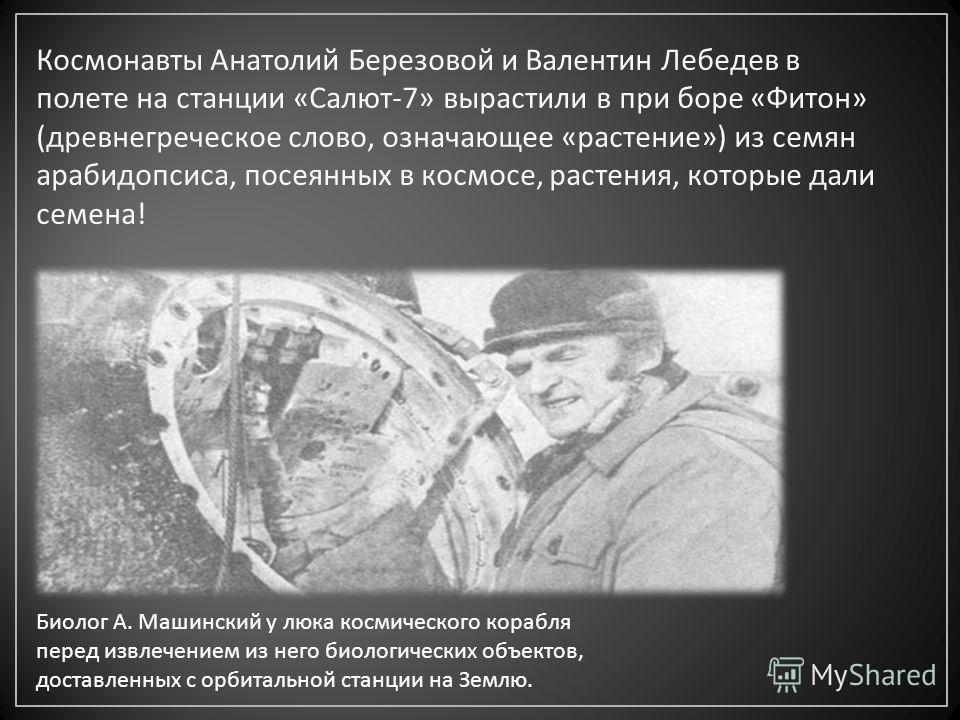 Космонавты Анатолий Березовой и Валентин Лебедев в полете на станции « Салют -7» вырастили в при боре « Фитон » ( древнегреческое слово, означающее « растение ») из семян арабидопсиса, посеянных в космосе, растения, которые дали семена ! Биолог А. Ма
