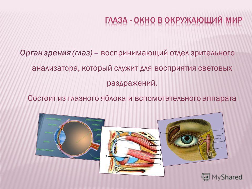 Орган зрения (глаз) – воспринимающий отдел зрительного анализатора, который служит для восприятия световых раздражений. Состоит из глазного яблока и вспомогательного аппарата