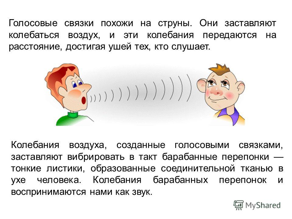 Голосовые связки похожи на струны. Они заставляют колебаться воздух, и эти колебания передаются на расстояние, достигая ушей тех, кто слушает. Колебания воздуха, созданные голосовыми связками, заставляют вибрировать в такт барабанные перепонки тонкие