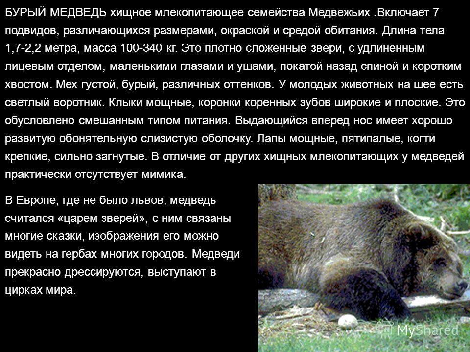 БУРЫЙ МЕДВЕДЬ хищное млекопитающее семейства Медвежьих.Включает 7 подвидов, различающихся размерами, окраской и средой обитания. Длина тела 1,7-2,2 метра, масса 100-340 кг. Это плотно сложенные звери, с удлиненным лицевым отделом, маленькими глазами
