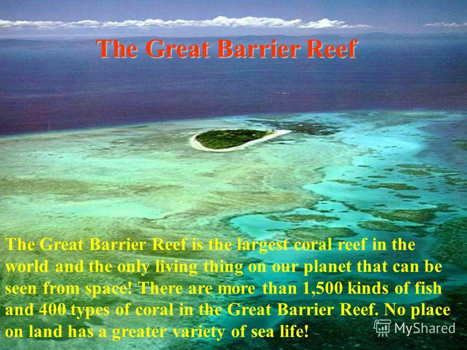 The Great Barrier Reef The Great Barrier Reef is the largest coral reef in the world and the only living thing on our planet that can be seen from space! There are more than 1,500 kinds of fish and 400 types of coral in the Great Barrier Reef. No pla