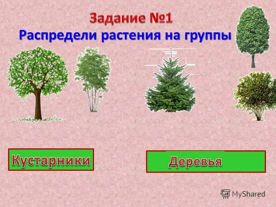 Распредели растения на группы 4