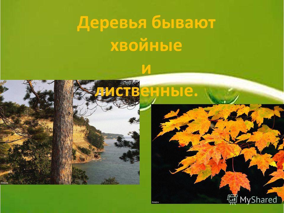 Деревья бывают хвойные и лиственные.