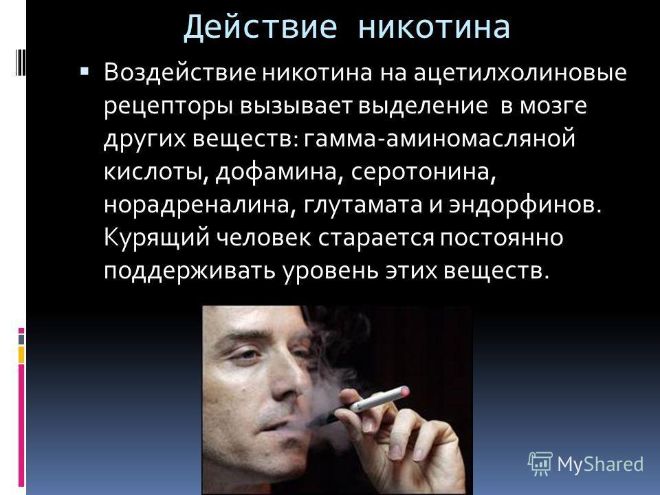 Действие никотина Воздействие никотина на ацетилхолиновые рецепторы вызывает выделение в мозге других веществ: гамма-аминомасляной кислоты, дофамина, серотонина, норадреналина, глутамата и эндорфинов. Курящий человек старается постоянно поддерживать