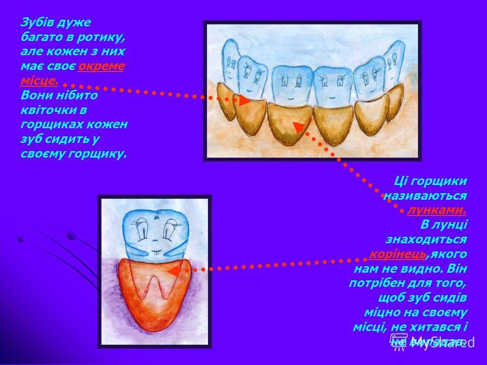 У кожної людини в ротику є зубки Вони дуже важливі тому,що ними ми що робимо?...кусаємо …пережовуємо їжу