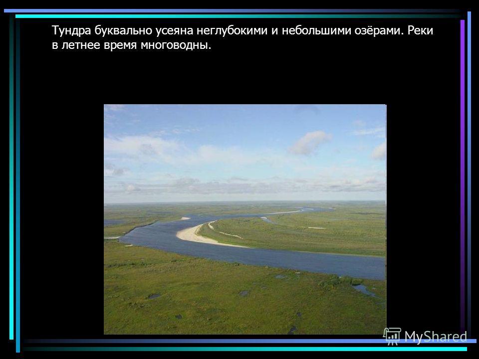 Тундра буквально усеяна неглубокими и небольшими озёрами. Реки в летнее время многоводны.