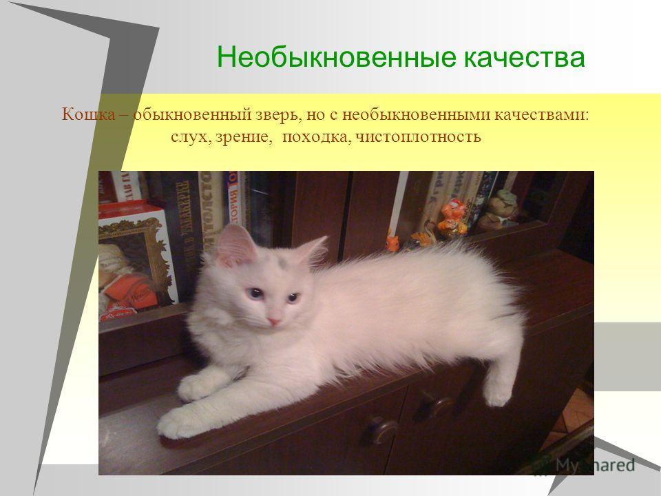 Необыкновенные качества Кошка – обыкновенный зверь, но с необыкновенными качествами: слух, зрение, походка, чистоплотность