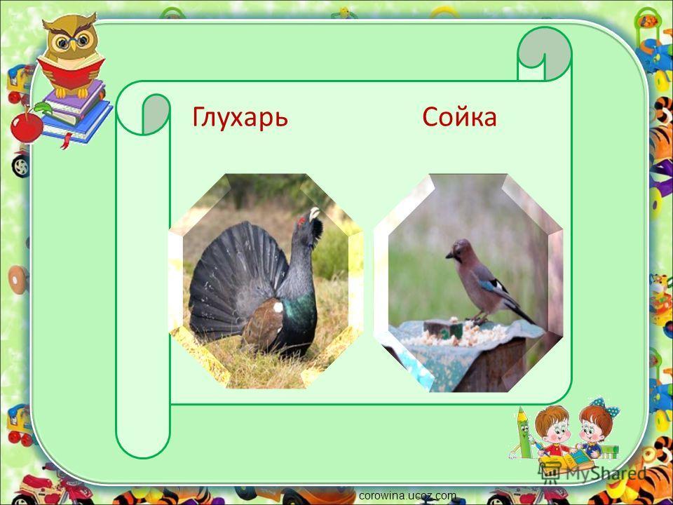 corowina.ucoz.com ГлухарьСойка