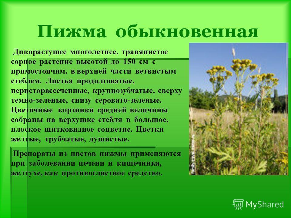 Пижма обыкновенная Дикорастущее многолетнее, травянистое сорное растение высотой до 150 см с прямостоячим, в верхней части ветвистым стеблем. Листья продолговатые, перисторассеченные, крупнозубчатые, сверху темно-зеленые, снизу серовато-зеленые. Цвет