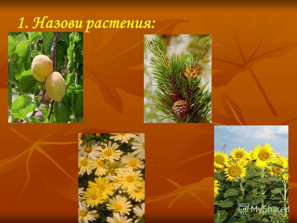 1. Назови растения: