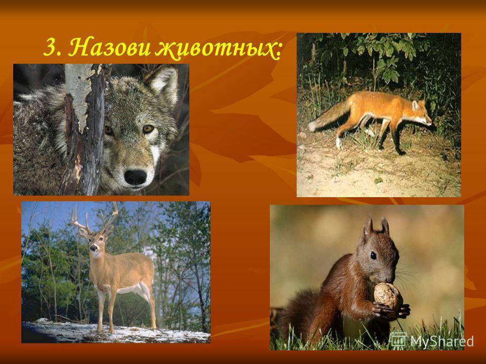 3. Назови животных: