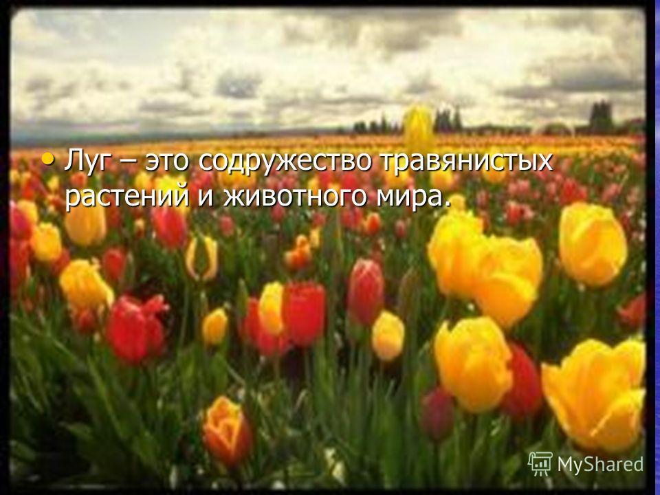 Луг – это содружество травянистых растений и животного мира. Луг – это содружество травянистых растений и животного мира.