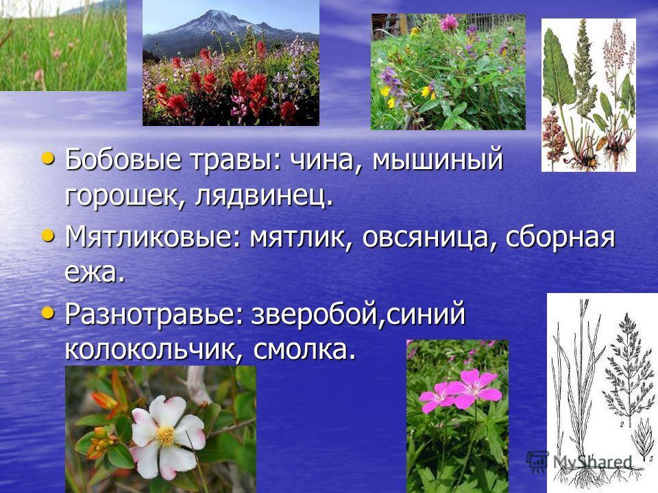 Бобовые травы: чина, мышиный горошек, лядвинец. Бобовые травы: чина, мышиный горошек, лядвинец. Мятликовые: мятлик, овсяница, сборная ежа. Мятликовые: мятлик, овсяница, сборная ежа. Разнотравье: зверобой,синий колокольчик, смолка. Разнотравье: звероб