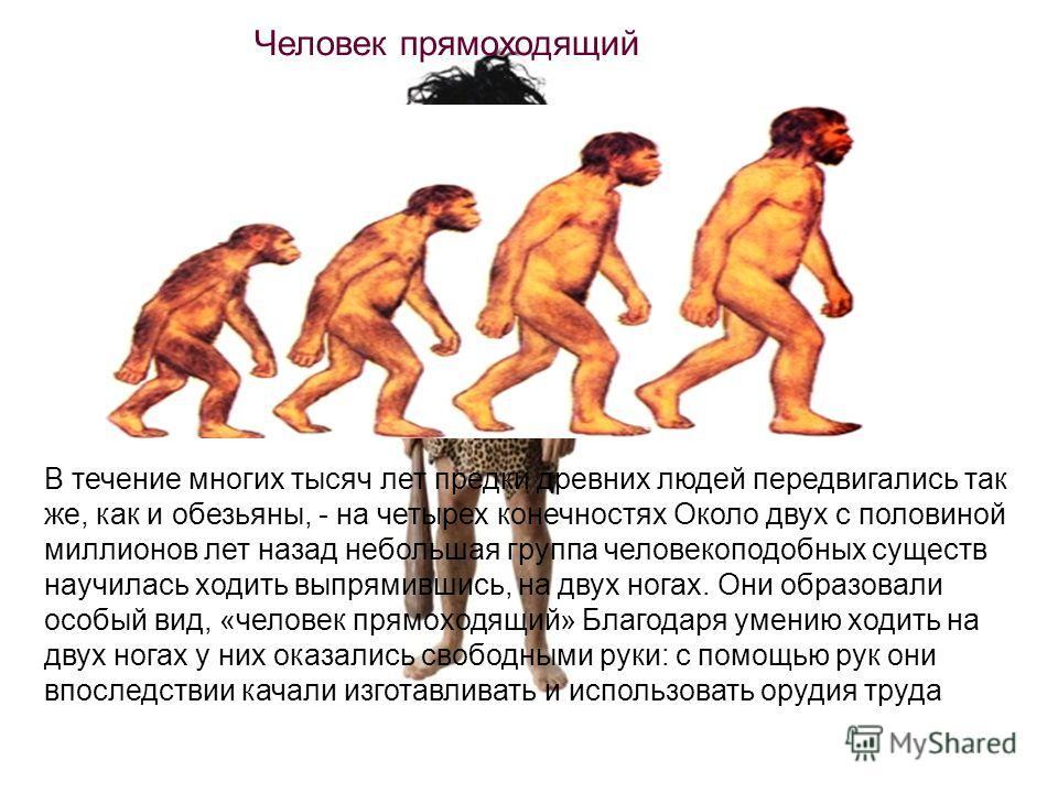 В течение многих тысяч лет предки древних людей передвигались так же, как и обезьяны, - на четырех конечностях Около двух с половиной миллионов лет назад небольшая группа человекоподобных существ научилась ходить выпрямившись, на двух ногах. Они обра