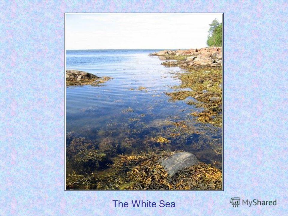 The White Sea