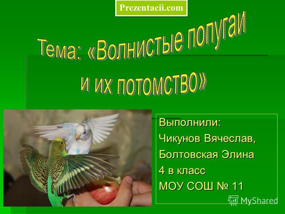 Выполнили: Чикунов Вячеслав, Болтовская Элина 4 в класс МОУ СОШ 11 Prezentacii.com