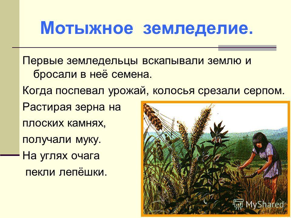 Первые земледельцы вскапывали землю и бросали в неё семена. Когда поспевал урожай, колосья срезали серпом. Растирая зерна на плоских камнях, получали муку. На углях очага пекли лепёшки. Мотыжное земледелие.