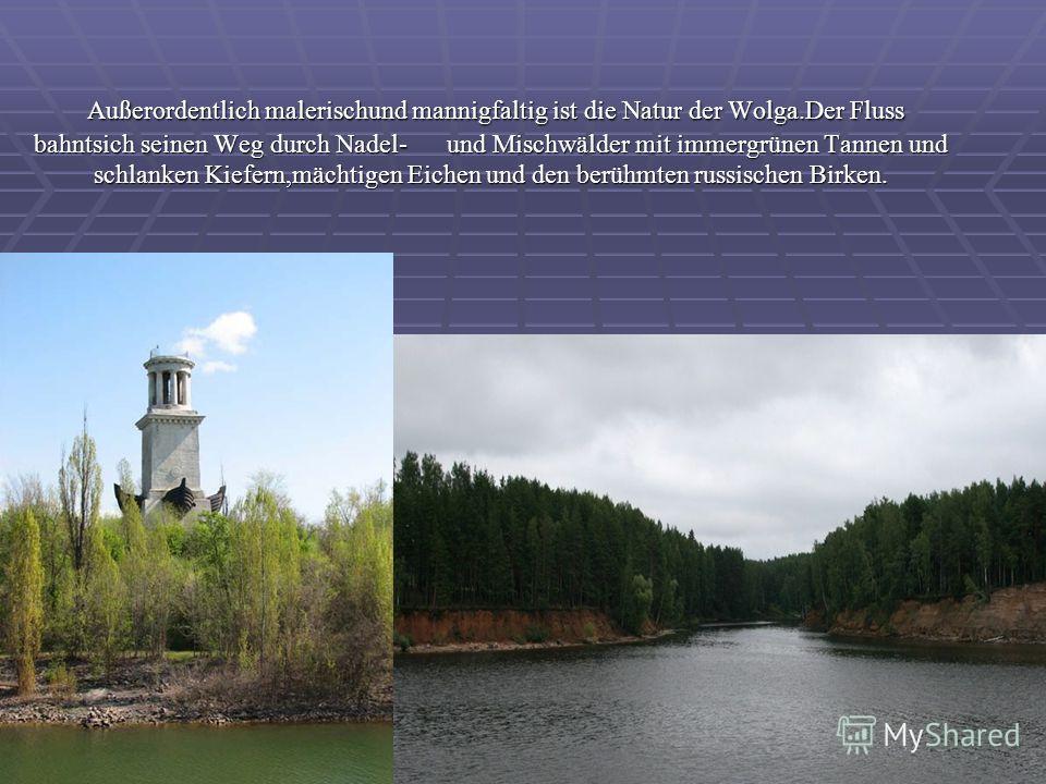 Außerordentlich malerischund mannigfaltig ist die Natur der Wolga.Der Fluss bahntsich seinen Weg durch Nadel- und Mischwälder mit immergrünen Tannen und schlanken Kiefern,mächtigen Eichen und den berühmten russischen Birken. Außerordentlich malerisch