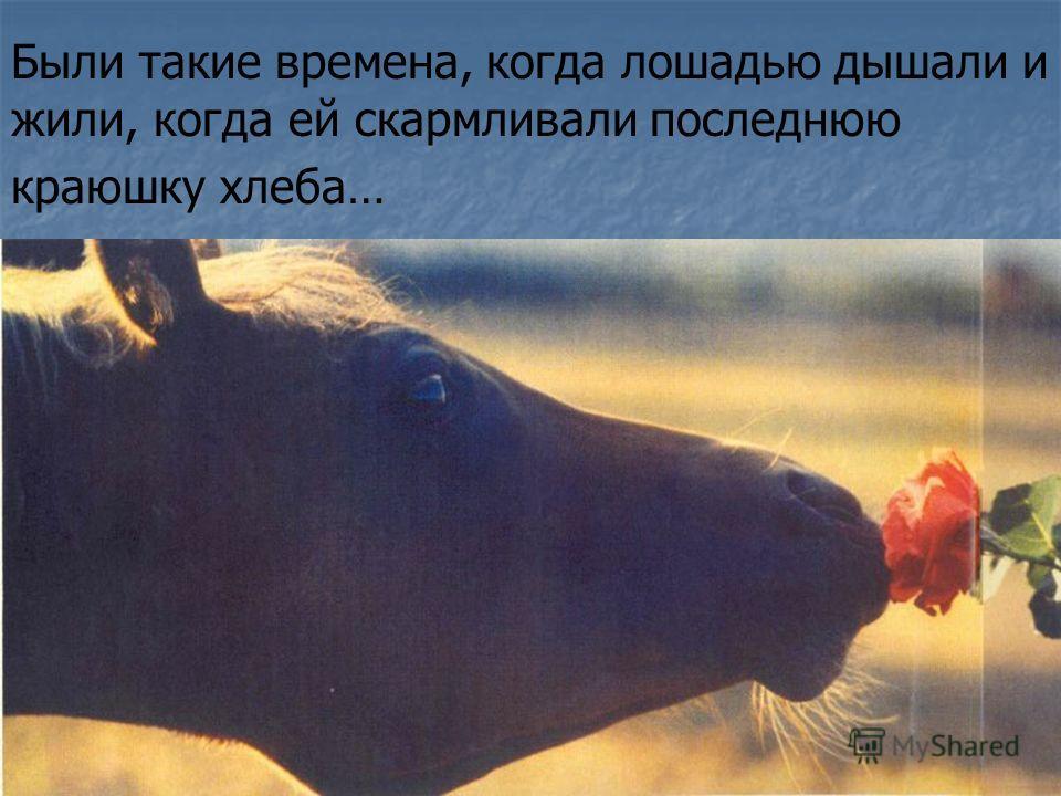 Были такие времена, когда лошадью дышали и жили, когда ей скармливали последнюю краюшку хлеба…