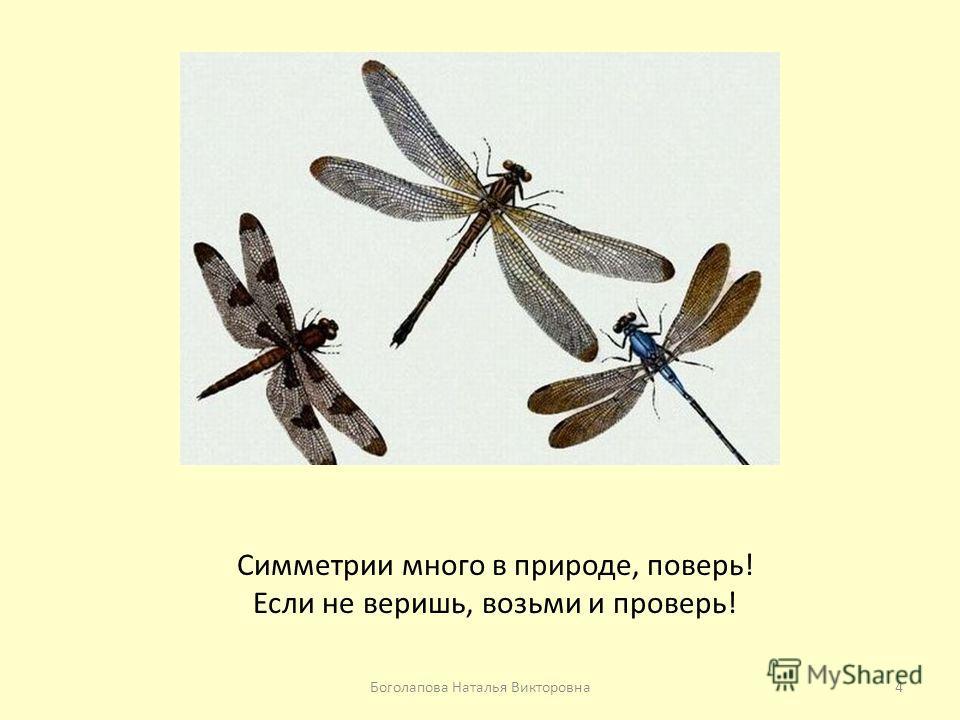 Симметрии много в природе, поверь! Если не веришь, возьми и проверь! 4Боголапова Наталья Викторовна