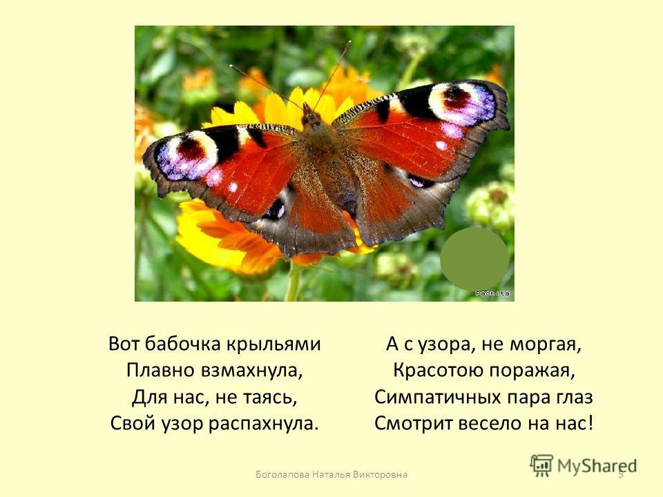 Вот бабочка крыльями Плавно взмахнула, Для нас, не таясь, Свой узор распахнула. А с узора, не моргая, Красотою поражая, Симпатичных пара глаз Смотрит весело на нас! 5Боголапова Наталья Викторовна
