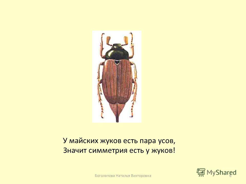 У майских жуков есть пара усов, Значит симметрия есть у жуков! 6Боголапова Наталья Викторовна