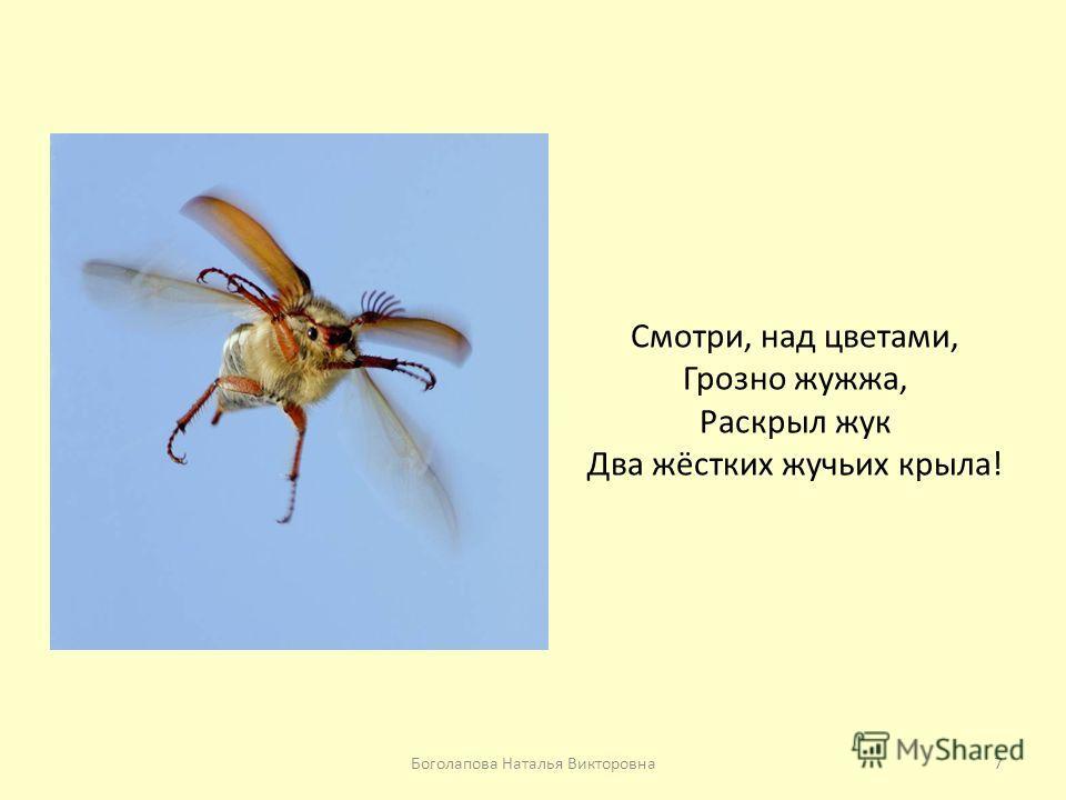 Смотри, над цветами, Грозно жужжа, Раскрыл жук Два жёстких жучьих крыла! 7Боголапова Наталья Викторовна