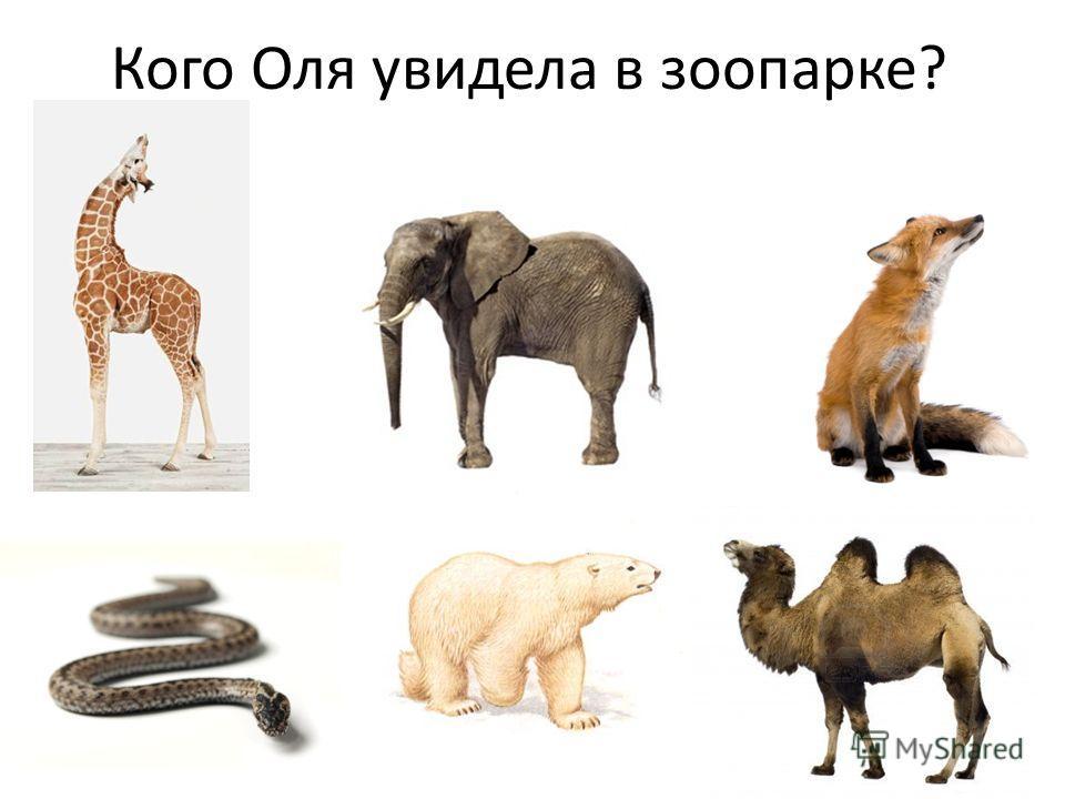 Кого Оля увидела в зоопарке?