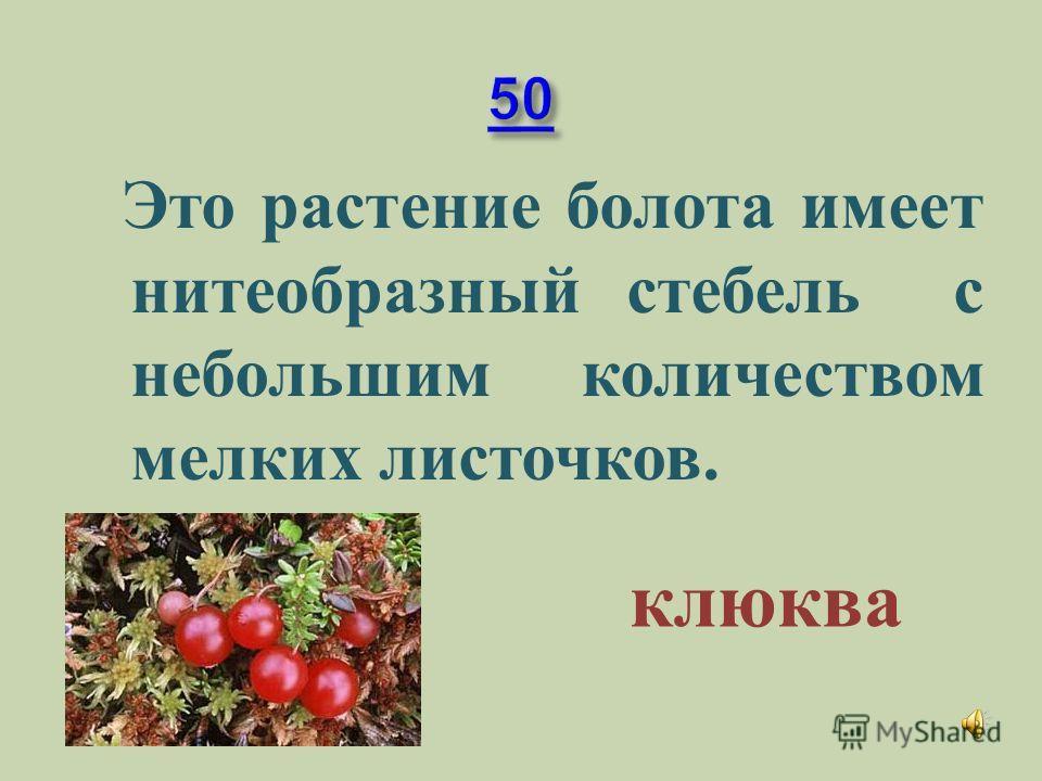 Это растение может быстро развиваться при наличии в почве небольшого количества питательных веществ. мох
