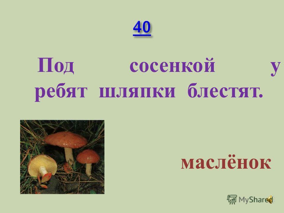 Какие грибы в наших лесах появляются самыми первыми? Строчки и с морчки