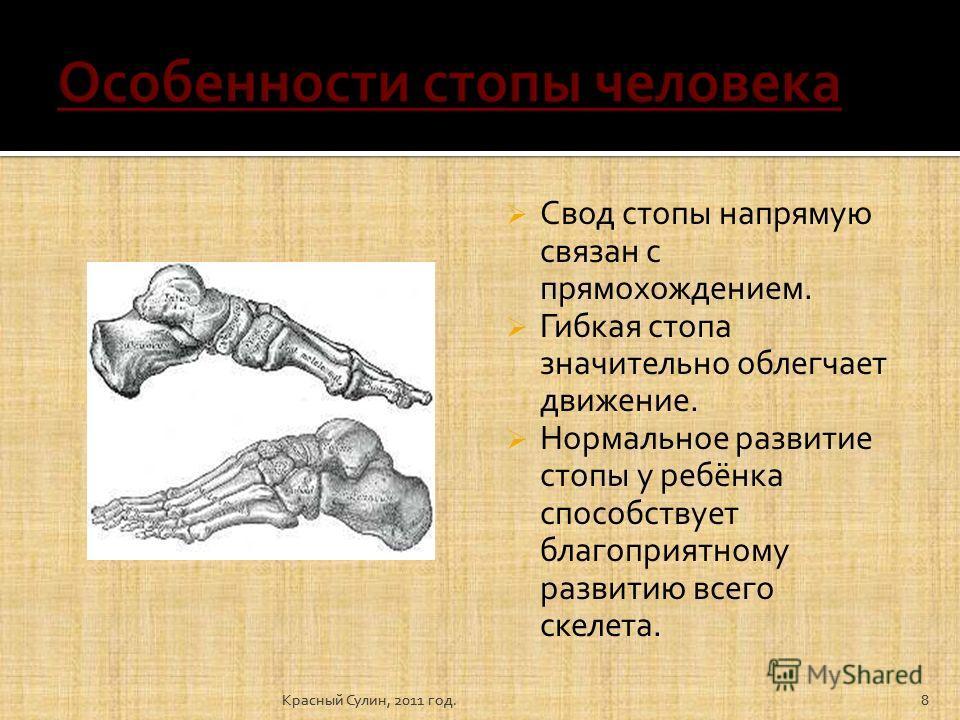 8 Свод стопы напрямую связан с прямохождением. Гибкая стопа значительно облегчает движение. Нормальное развитие стопы у ребёнка способствует благоприятному развитию всего скелета. 8Красный Сулин, 2011 год.