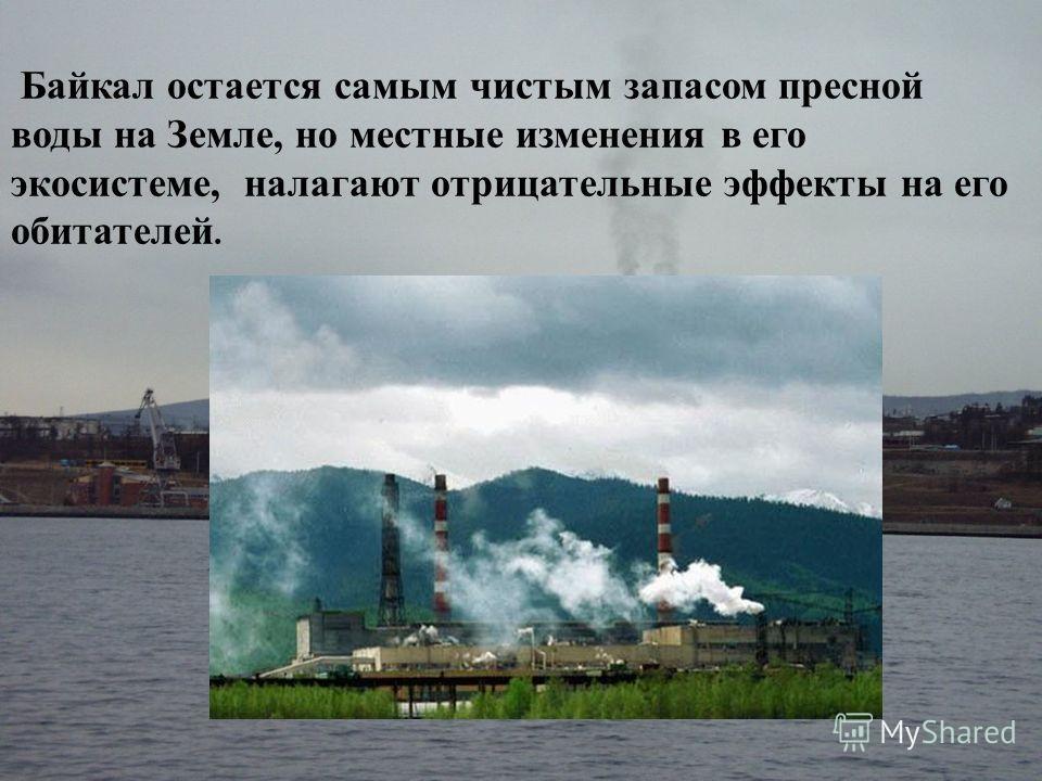 Байкал остается самым чистым запасом пресной воды на Земле, но местные изменения в его экосистеме, налагают отрицательные эффекты на его обитателей.