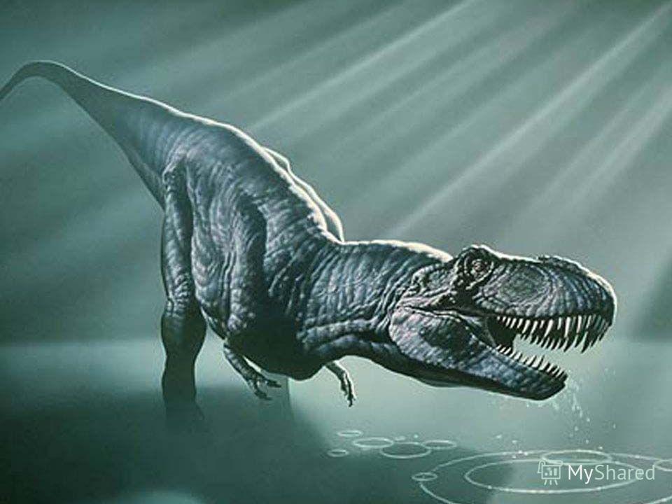 Кархародонтозавр Кархародонтозавр Кархародонтозавры жили около 110 млн. лет назад в Северной Африке.Найденные учёными останки этого ящера позволили получить представление о том,как он выглядел.Скорее всего длина его 8 метрам. Кархародонтозавры жили о