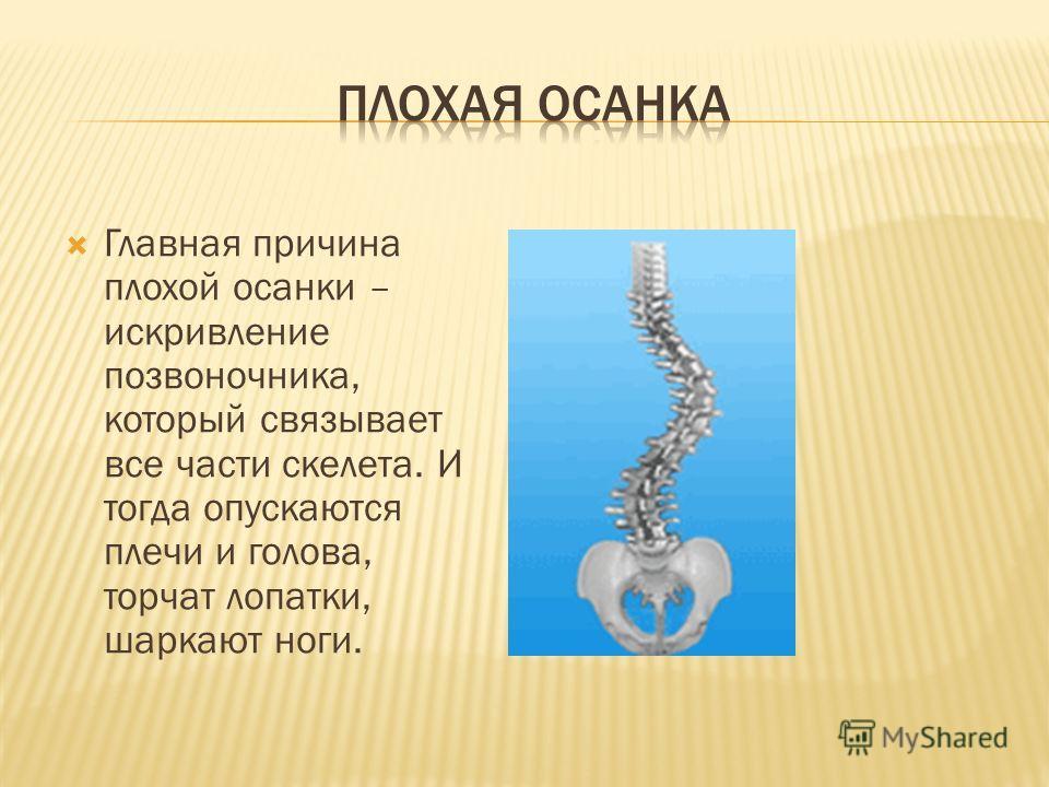 Главная причина плохой осанки – искривление позвоночника, который связывает все части скелета. И тогда опускаются плечи и голова, торчат лопатки, шаркают ноги.