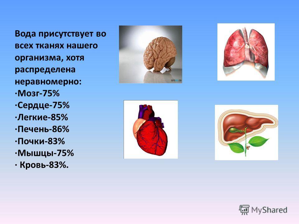 Вода присутствует во всех тканях нашего организма, хотя распределена неравномерно: ·Мозг-75% ·Сердце-75% ·Легкие-85% ·Печень-86% ·Почки-83% ·Мышцы-75% · Кровь-83%.