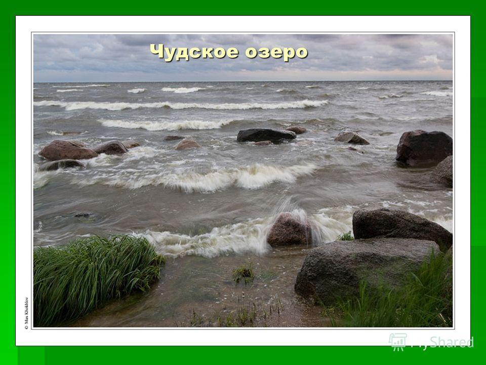 Чудское озеро Чудское озеро