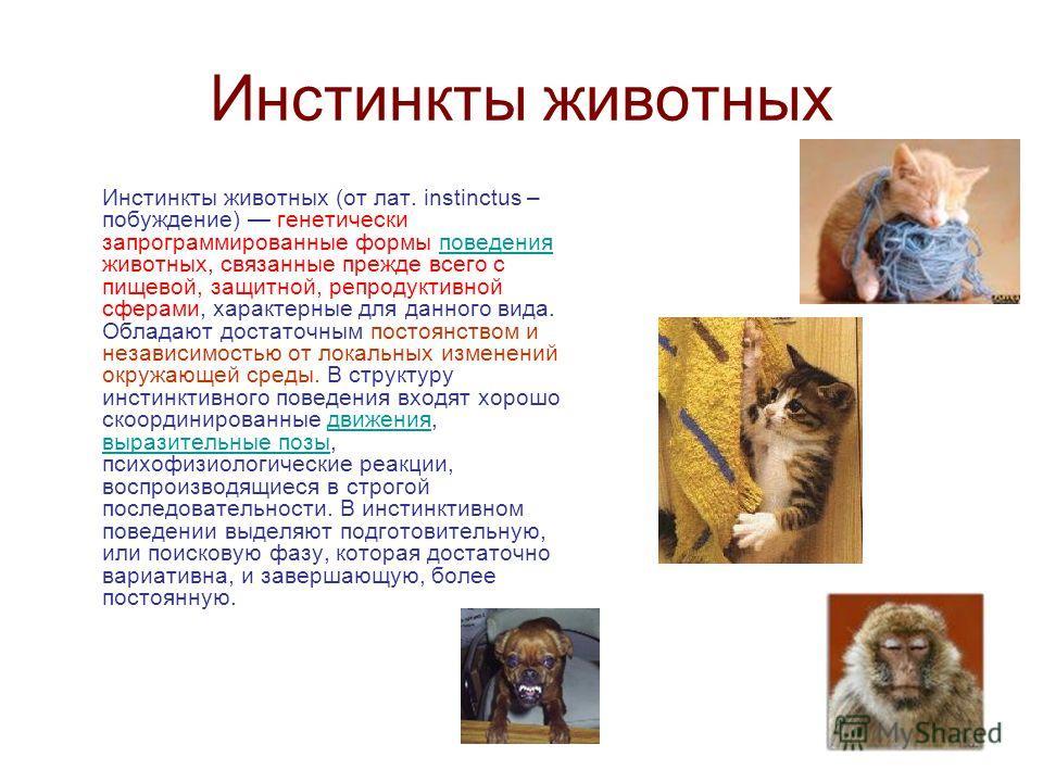 Инстинкты животных Инстинкты животных (от лат. instinctus – побуждение) генетически запрограммированные формы поведения животных, связанные прежде всего с пищевой, защитной, репродуктивной сферами, характерные для данного вида. Обладают достаточным п