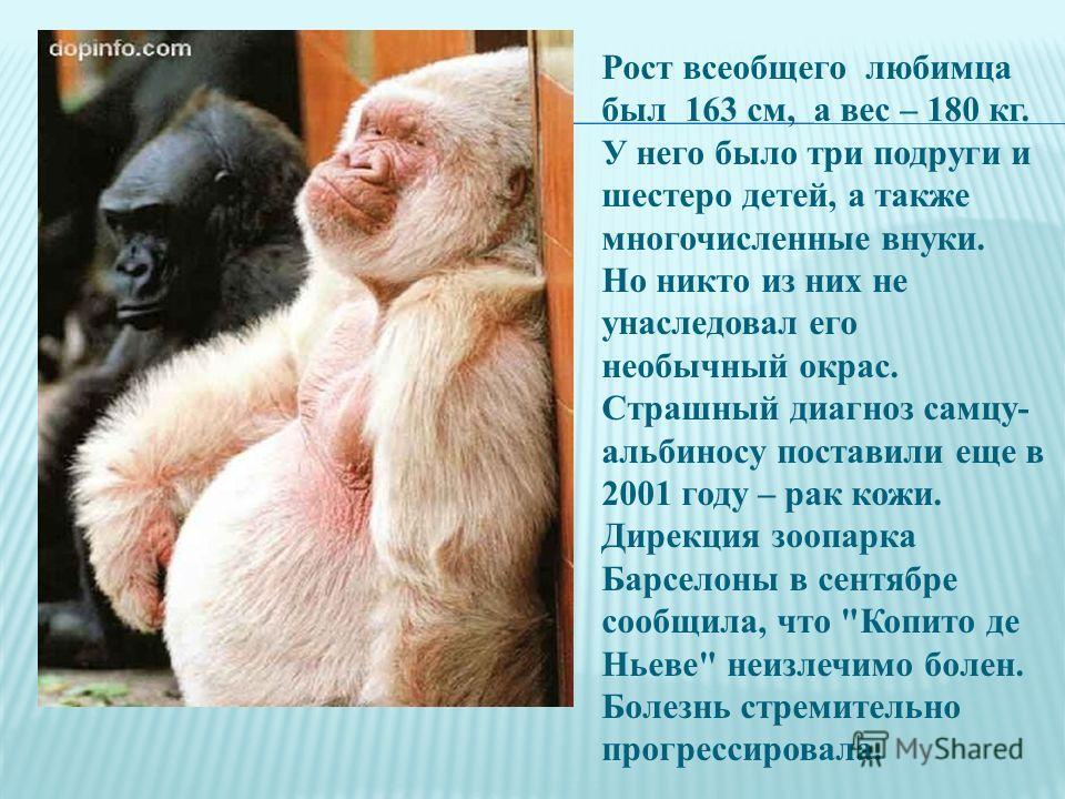 Рост всеобщего любимца был 163 см, а вес – 180 кг. У него было три подруги и шестеро детей, а также многочисленные внуки. Но никто из них не унаследовал его необычный окрас. Страшный диагноз самцу- альбиносу поставили еще в 2001 году – рак кожи. Дире
