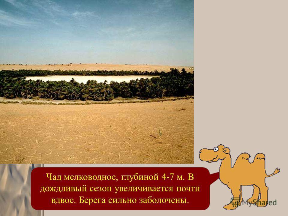 Чад мелководное, глубиной 4-7 м. В дождливый сезон увеличивается почти вдвое. Берега сильно заболочены.
