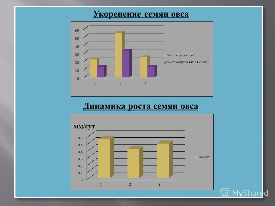 Укоренение семян овса Динамика роста семян овса Укоренение семян овса Динамика роста семян овса