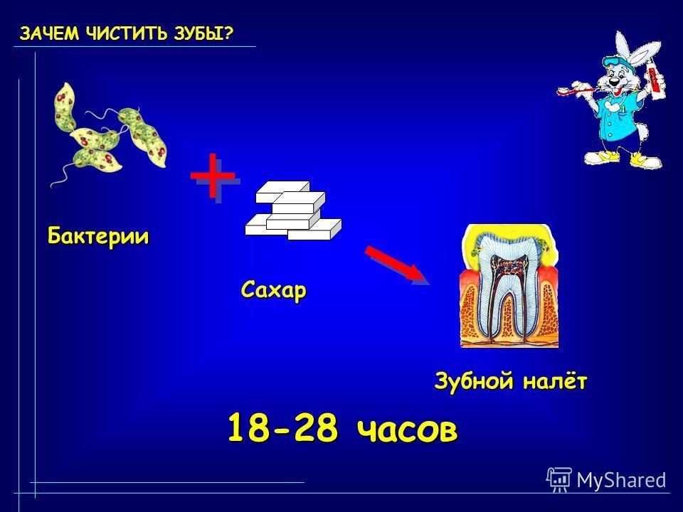 ЗАЧЕМ ЧИСТИТЬ ЗУБЫ? 18-28 часов Бактерии Сахар Зубной налёт