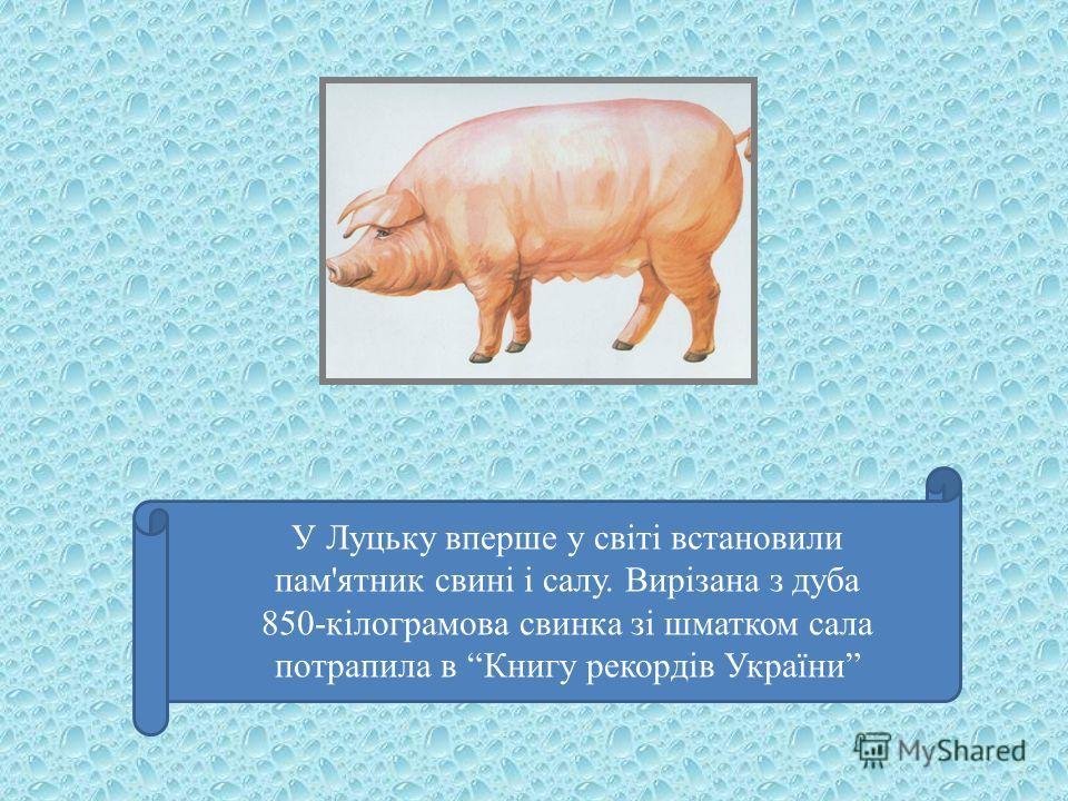 У Луцьку вперше у світі встановили пам'ятник свині і салу. Вирізана з дуба 850-кілограмова свинка зі шматком сала потрапила в Книгу рекордів України