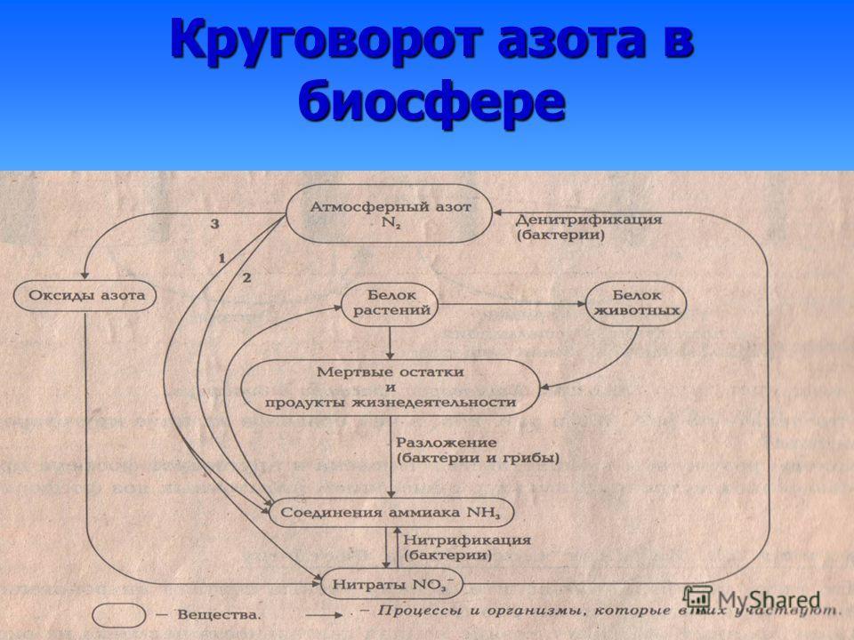 Круговорот азота в биосфере