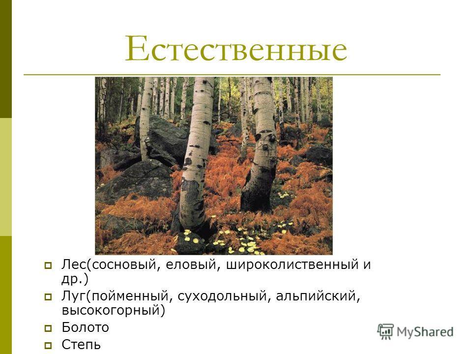 Естественные Лес(сосновый, еловый, широколиственный и др.) Луг(пойменный, суходольный, альпийский, высокогорный) Болото Степь