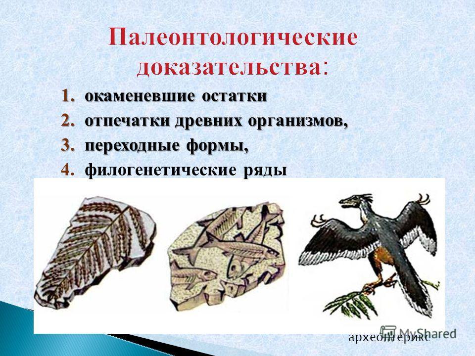 1.окаменевшие остатки 2.отпечатки древних организмов, 3.переходные формы, 4.филогенетические ряды археоптерикс
