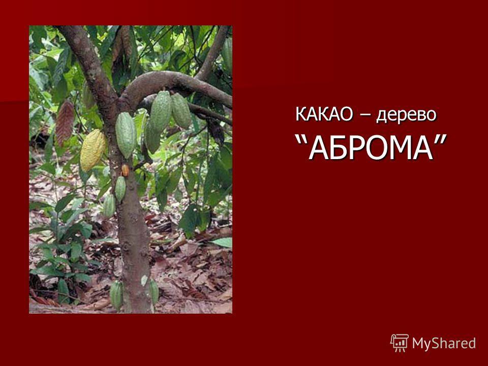 КАКАО – деревоАБРОМА КАКАО – деревоАБРОМА