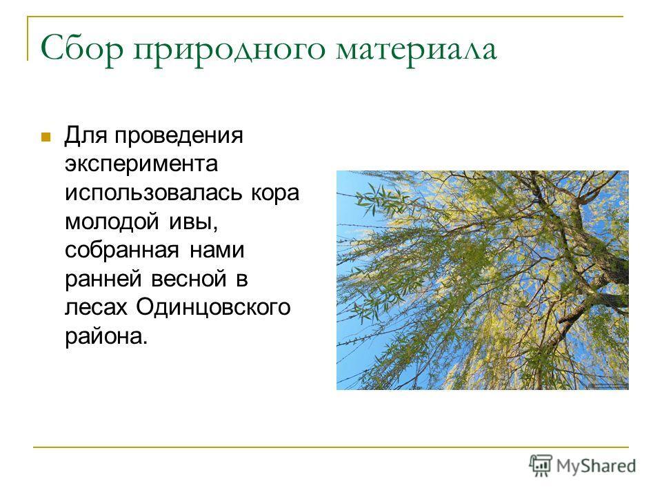 Сбор природного материала Для проведения эксперимента использовалась кора молодой ивы, собранная нами ранней весной в лесах Одинцовского района.