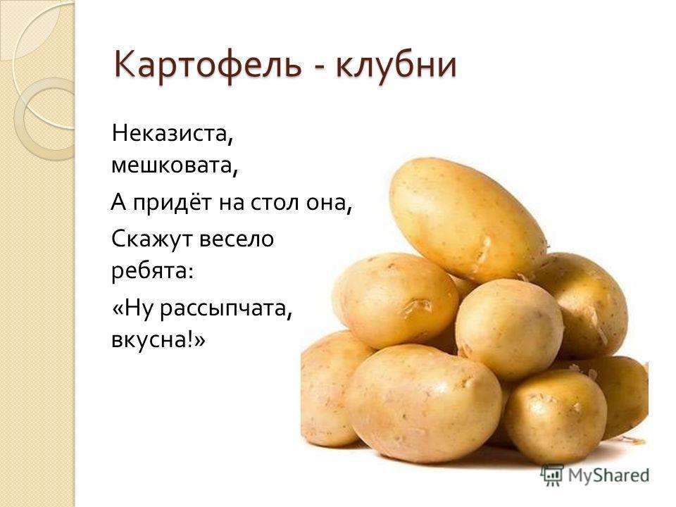 Картофель - клубни Неказиста, мешковата, А придёт на стол она, Скажут весело ребята : « Ну рассыпчата, вкусна !»