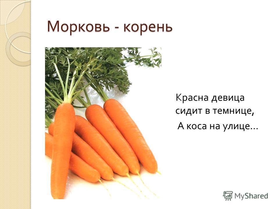 Морковь - корень Красна девица сидит в темнице, А коса на улице …
