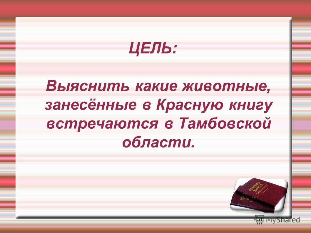 ЦЕЛЬ: Выяснить какие животные, занесённые в Красную книгу встречаются в Тамбовской области.